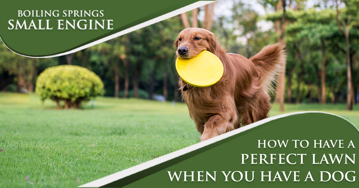 How To Have A Perfect Lawn When You Have A Dog