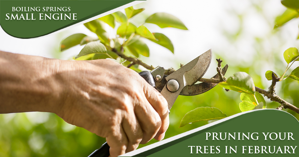 February Maintenance Tip – Pruning Your Trees