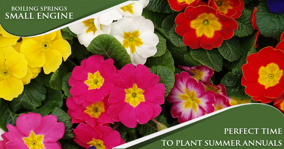 May Tip – Perfect Time To Plant Summer Annuals